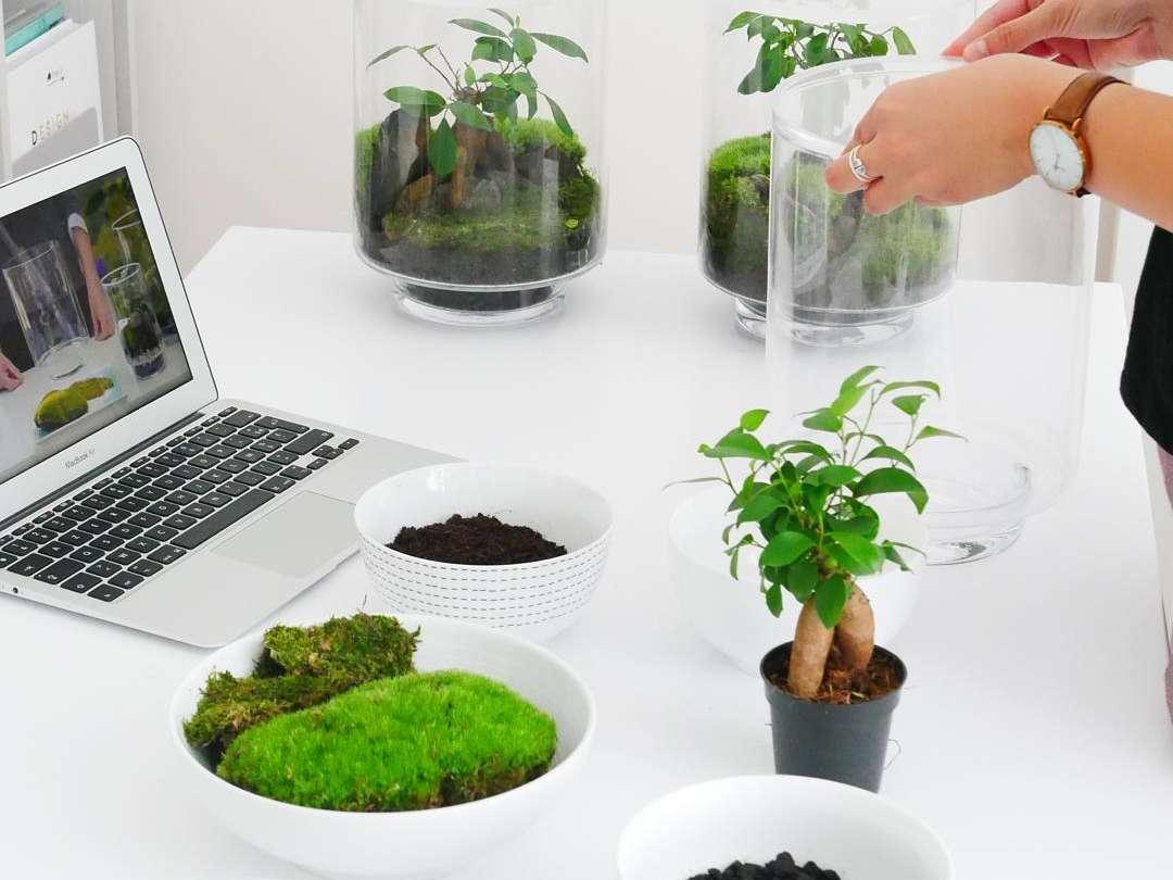 La préparation du terrarium en kit do it yourself yamayama