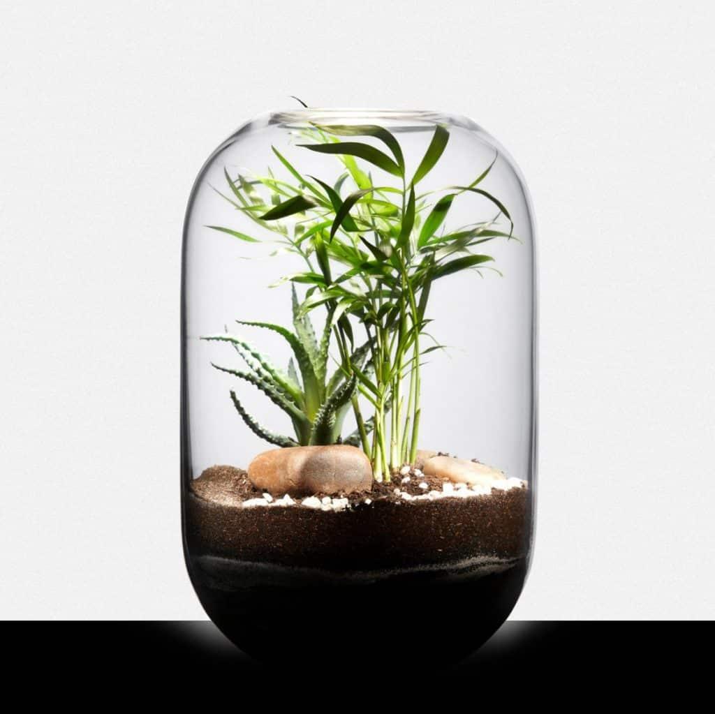 créez votre propre terrarium végétal