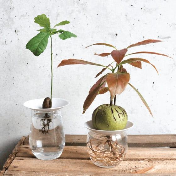 Tout le nécessaire pour s'essayer à la culture de plantes dans l'eau